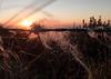 Sunset (Martzimages) Tags: martzimages barbedwire fence fencefriday wool sunset twilight
