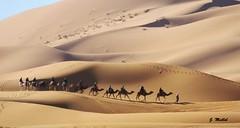 Caravana en Erg Chebbi (Jesus Mallol) Tags: camellos dromedarios dunas desierto marruecos caravana