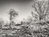 Winter (enneafive) Tags: meadow winter frost borgloon meersbeemd olympus omd em5