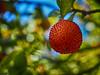 Colores (la_magia) Tags: fruto madroño colores otoño bierzo león lasmedulas españa bokeh