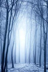 Creepy Forest (Gruenewiese86) Tags: harz winter forest wood woodland explore exploreharz nature naur wald wälder wandern waldlandschaft waldlandschaften waldboden froozen snow schnee canon 6d germany german deutschland 70200 landschaft landscape märchenhaft märchen traum