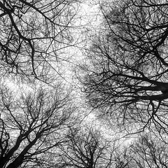 Bare branches (vermont1997) Tags: barebranches trees nature winter blackandwhite