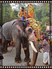 20161221_160905 b (Tartarin2009 (travelling)) Tags: kerala india munnar templefestival samsunggalaxys7 tartarin2009 elephant travel animal ceremony