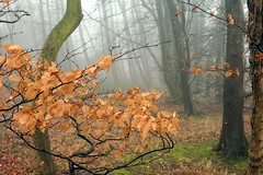 The Enchanted Forest (Alan1954) Tags: foggy arundel walking sussex 2017 nature trees platinumpeaceaward