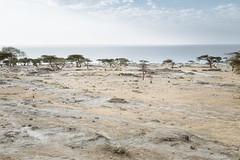 26 December, 16.04 (Ti.mo) Tags: africa iso100 december 8 40mm ethiopia f56 et 2014 sidama ••• ¹⁄₂₀₀secatf56 ⅓ev southernnationsnationalitiesandpeoplesregion ef40mmf28stm