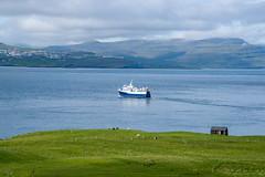 Nolsoy: Ternan returning to the capital (jaeschol) Tags: atlantic faroeislands faroe nolsoy nlsoy streymoy