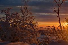 Morgenstimmung (Sandsteiner) Tags: sunrise sonnenaufgang morgenstimmung winter winterlandschaft gohrisch rosenberg elbsandsteingebirge sandsteiner
