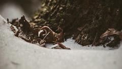 Winter_12 (losing.today) Tags: nature oregon outdoors pacificnorthwest portland pdx portlandor portlandoregon cold coldseason winter snow