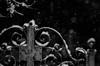 Snowfall (Vassallo Salvatore) Tags: gate snow winter white biancoenero fiocchi inverno freddo gelo neve cancello bnw
