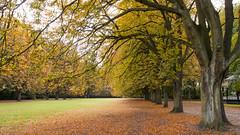 Autumn in Sweden (HansPermana) Tags: scandinavia sweden malmö park trees green leaves garden grass nature