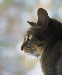 The Watcher (Brian 104) Tags: digitalart cat watching window staring ilobsterit
