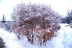 Snow Scene, Toronto Botanical Garden, Toronto, ON (Snuffy) Tags: snow winter seasons torontobotanicalgarden edwardsgarden northyork toronto ontario canada level1photographyforrecreation niceasitgetslevel1