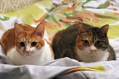 IMG_194999 (toТetsu) Tags: cats cat kitten minsk