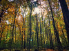 FullSizeRender (35) (sswartz) Tags: michigan fall autumn nature autumnleaves leaves leaf trees forest woods
