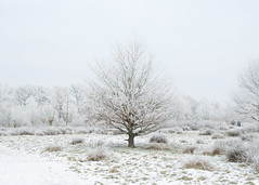 Witte wereld! (Geziena) Tags: wintersplaatje winters vorst rijp boom sneeuw wit landscape landschap