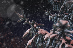 Winter (Sareni) Tags: sareni serbia srbija vojvodina banat juznibanat alibunar center centar snowing snow sneg sky pahulje nebo night noc light svetlost zima winter january 2017 twop