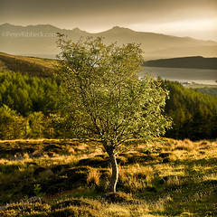 Fairlie Tree 12-6-15 (Peter Ribbeck) Tags: architecture photographer scottish landscapeartist landscapephotographeroftheyear peterribbeck ayrshirephotographer lpoty photographartist ©peterribbeck £££photographer ayrshirelandscapephotographer lpotywinner architecturephotographspicture scottishheritageimages northayrshirephotographer southayrshirephotographer peterribbeckcom