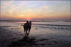 My Dog as a Puppy (Wouter   Sere) Tags: dog hond pitbull american breed huisdier staffy amstaff lean apbt agile terriër hondenras