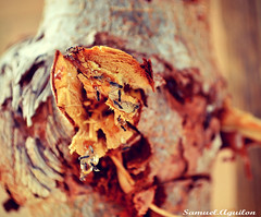 honey tree (yokodev) Tags: trees nature bees honey vibes filters