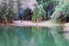 IMG_0325.jpg (DrPKHouse) Tags: arizona unitedstates loco willowbeach