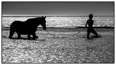 The Girl and The Horse (Drummerdelight) Tags: horse shillouette bw seascape