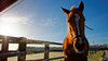 Curiosity stare (Cécile Fourquemin) Tags: horse studfarm outdoor sky frost morning sidelight
