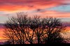 Happy New Year! (Ryan Jeske) Tags: trees color sunset sillouette canon7dii telephoto clouds canonef100400mmf4556lisiiusm sky red