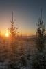 Winter Wonderland (laurilehtophotography) Tags: snow winter sunset trees forest clear sky sun evening cold landscape nature leppälahti jyväskylä suomi finland nikon d3100 nikkor 1755mm f28g benro amazing scene halo light maisema