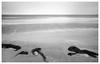 Hiddensee Coast (derkleinebiber) Tags: seafoam seagrass seegras seascape seascapes blackandwhite minimalist fine layers beach strand ostsee balticsea landscape