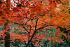 Late Autumn of Hangzhou (willding96) Tags: late autumn hangzhou spiritofphotography china leaf leafy winter sony a7 red green travel