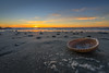 Scattered Remnants (JeffMoreau) Tags: ocean beach shore sea folly charleston south carolina sunrise sony a7ii zeiss 1635mm morning seashell shell