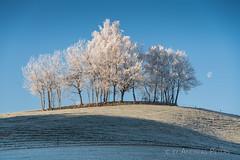 A9900874_s (AndiP66) Tags: winterstimmung altbüron melchnau luzernerhinterland rottal kanton luzern cantonoflucerne bern cantonofberne winter nebel fog mist gefroren reif frosted frozen hoarfrost sun sonne sunrays sonnenstrahlen hills hügel sony sonyalpha 99markii 99ii 99m2 a99ii alpha ilca99m2 slta99ii sigma24105mmf4dghsmart sigma 24105mm f4 amount andreaspeters