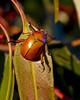 buggy bug (fotowomble) Tags: macro fotowomble bugs 100mmf28 australia nsw snowy mountains canon 7d