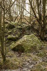 Pitcaple Forest Walk 10 (Bob Hetherington) Tags: pitcaplegrampian pitcaple grampian scotland aberdeenshire winter frost trees forest scenic panasonic li lumix gx7 micro43