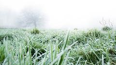 fog (Sam Bdn photography) Tags: brest plabennec bretagne finistere france fog brouillard brume myst haze green nature wild campagne sauvage nikon d3100 18mm herbe gelée compaign