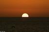 Sun,Sea & Ibiza (JM Luke) Tags: seagull ibizalifestyle ibizaphotography ibizalovers ibiza balearicislands baleares islasbaleares island isla spain españa sunset sun nature natural mediterraneo travelphotography