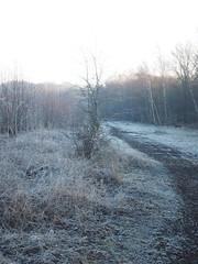 Manual Photos - Batch3-Jan1704 (greenby.nature) Tags: frozen frozenleaf rust rustedcars rustedengine moss frozenpuddles frostywalk sunthroughthetrees grass decayedsleepers
