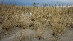 Winter Grass (Bud in Wells, Maine) Tags: dunes grass dunegrass drakesisland wells maine winter