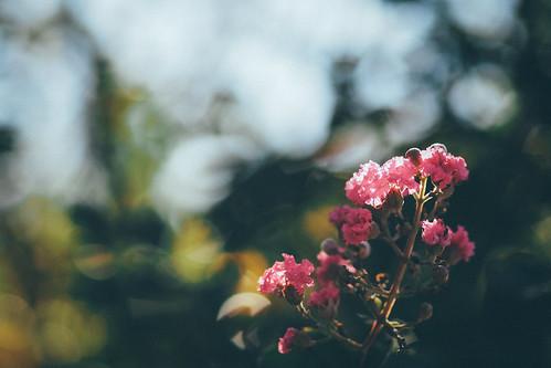 Flowers|Taipei 台北 士林官邸