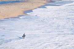 Man VS Wild (matthew_image) Tags: canon 6d 85mm 18 man wild vs sea ocean water men beach surf surfing santacruz santa cruz lightroom sunny