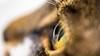 Cat's Eye (deyveone) Tags: cat eye auge katze
