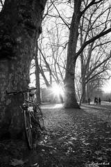 Tübingen im Winter #04 (Gerhard Busch) Tags: bäume eis eisdecke neckar platanenallee spaziergang tübingen winter gefroren