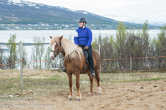 _8HR5408.jpg (Linnea Nordstrm) Tags: horses horse sport norway island norge north competition riding pace nord riders troms icelandic tolt hst paces islandshst tlt vikingur tlt