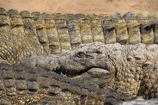 Krokodilfarm in Malawi