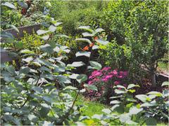 D A N K E / T H A N K S (manniservus) Tags: countryside outdoor wildlife natur pflanze feld blume blte landschaft muster schrfentiefe pflanzenwelt organisches