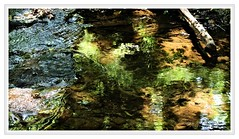 River reflections... (PAUL YORKE-DUNNE) Tags: uk water canon reflections river devon 7d tamron dartmoor mkii cornwood 150600 piall