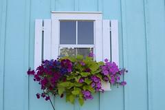 Window on the Artist Shanty (Read2me) Tags: hyannis blue window flower cye superherowinner pregamewinner challengeclubwinner gamewinner thechallengefactory perpetual perpetualchallengewinner