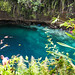Enchanted River - Hinatuan, Surigao