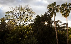tree house (patri aragon) Tags: landscape paisaje treehouse ilovethistree patriciaaragonmartin