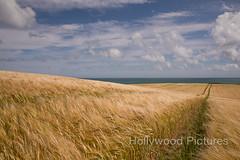 DSC_6109 (Fran Hollywood Autosportpics.com) Tags: ireland sea summer sky seascape field barley clouds rural landscape coast countryside farming cereal shoreline harvest crop wexford seaview sunnysoutheast leinster arable curracloe
